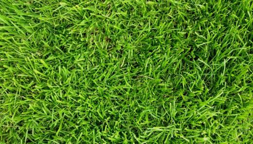 grass-520x297